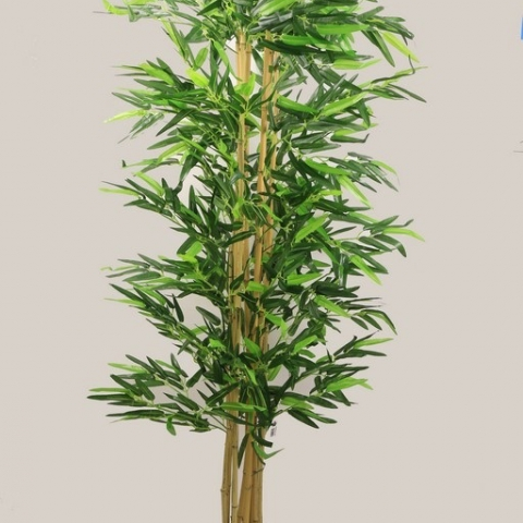 צמח במבוק גזע טיבעי 12 קנים גובה 1.80 ס