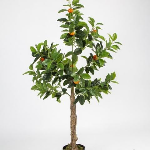 עץ תפוז ננסי בעציץ. גובה - 1.30 מטר.